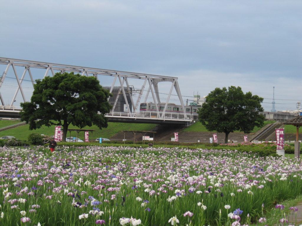 京成電鉄が来たので撮影。さらに右には東京スカイツリーも見ることができます